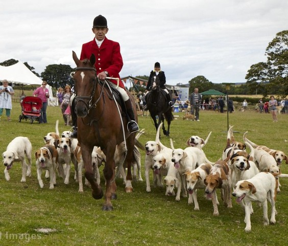 The West Percy Hounds at Glanton Show